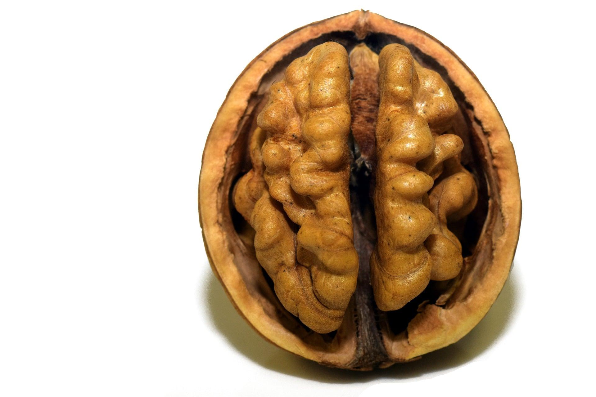 Jádro vlašského ořechu vypadá jako lidský mozek / foto: pixabay.com