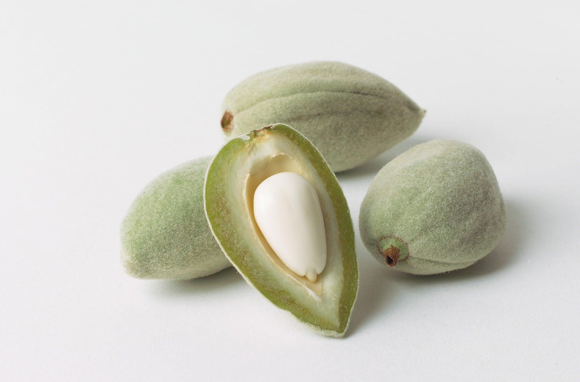 Plodem mandloně obecné je zelená peckovice / foto: pixabay.com
